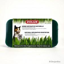 Herbe à chat dépurative Zolux