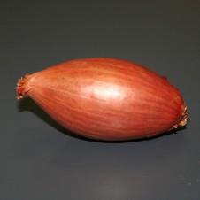 "Echalote ""Longor"" 1kg - Calibre 15/35"