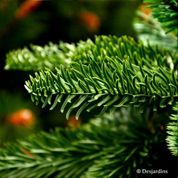 Sapin artificiel abies nordmann vert 155 cm triumph tree - Sapin de noel nordmann ...