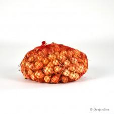 Oignon jaune 500g - Calibre 8/21