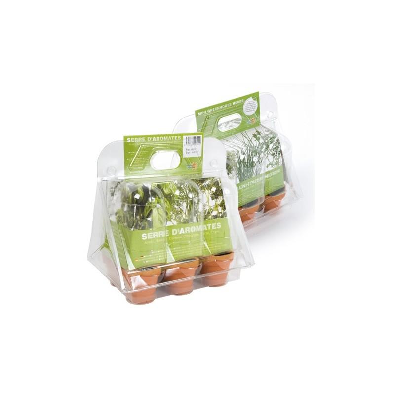Mini serre - 6 plantes aromatiques bio