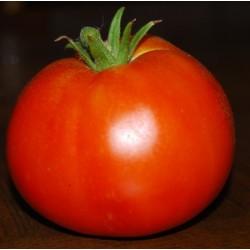 Tomate Tresor - Barquette de 6