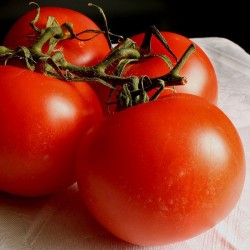 Tomate Fournaise - Barquette de 6