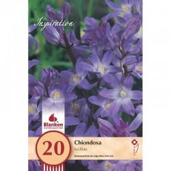 """Chionodoxa Luciliae"" Blanken X20 - calibre 5/6+"