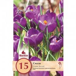 """Crocus Flower Record"" Blanken X15 - calibre 8/+"