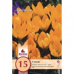 """Crocus Yellow Mammouth"" Blanken X15 - calibre 8/9"