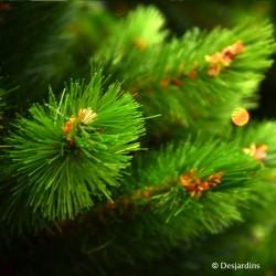 """Sapin artificiel """"Richmond Pine"""" - 230cm"""