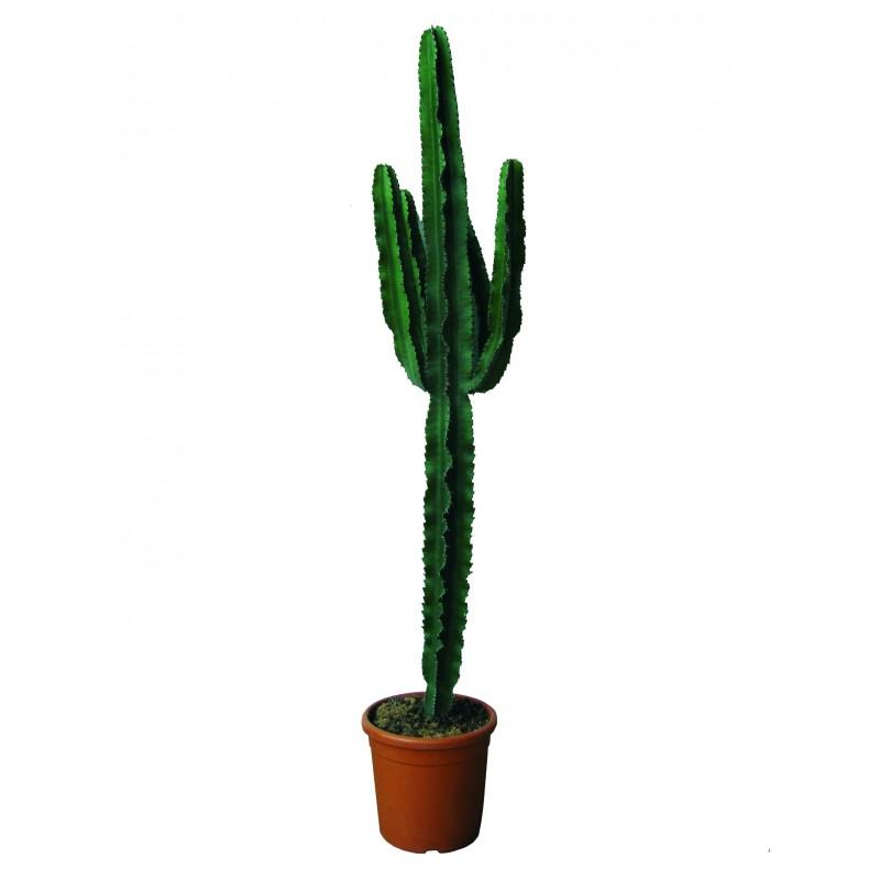 Purifiant lair Facile /à soigner Hauteur: 90 cm Hellogreen Plante dint/érieur Euphorbe Erytrea Cactus