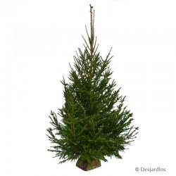 Sapin naturel - Picea Excelsa - 200/250cm