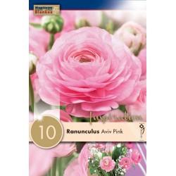 "Renoncule ""Aviv rose "" Blanken X10"