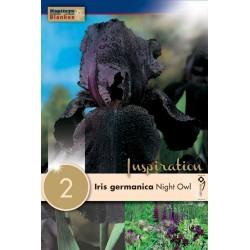 "Iris germanica ""Night Owl"" Blanken X2"