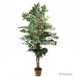 Ficus artificiel - DESJARDINS