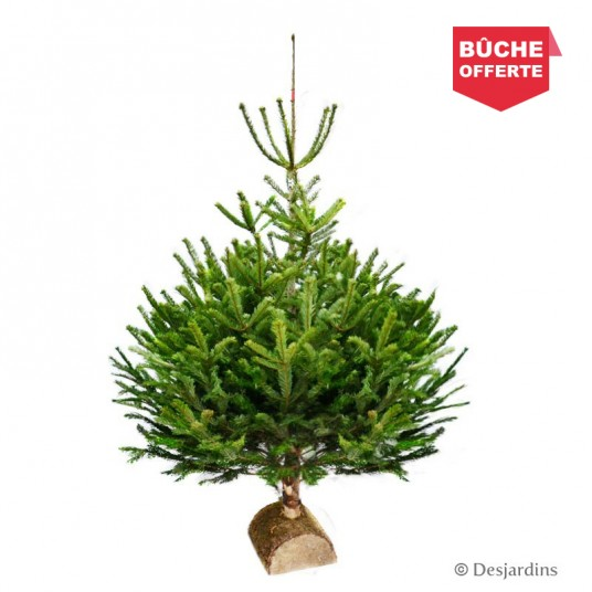 "Sapin naturel coupé ""Abies Nordmann"" - 175/200 cm"