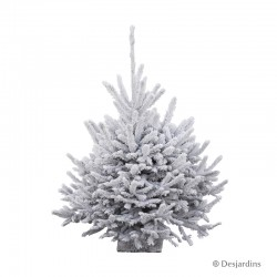 Sapin naturel glacé Abies Nordmann ROBIN® - 90/100 cm