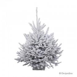 Sapin naturel glacé Abies Nordmann ROBIN® - 110/125 cm