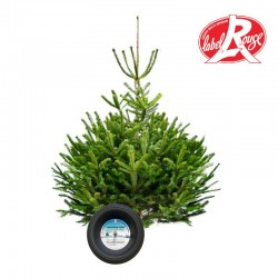 Sapin naturel coupé / pied percé Abies Nordmann + support à réserve d'eau - 200/250 cm - Label Rouge