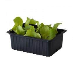 Barquette 6 plants de salade