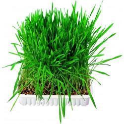 Bac d'herbe aux petits animaux bol/env. 100g - TRIXIE