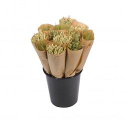 Botte de fleurs séchées graminée