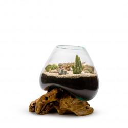 Terrarium vivant Amazonia cactus xl