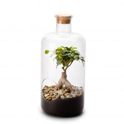 Terrarium vivant medicine xl ginseng