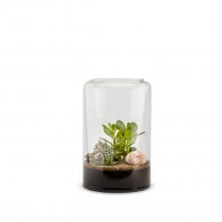 Terrarium vivant Mia M succulente