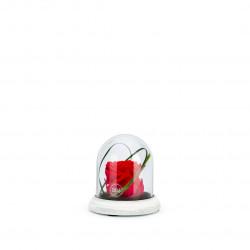 Verrine cloche socle ciment XS rouge