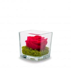Verrine Genova rouge