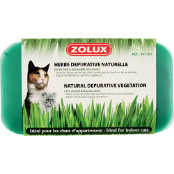 Herbe a chat - ZOLUX
