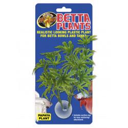 Betta plant - papaya bp21 - ZOOMED