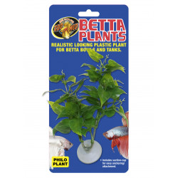 Betta plant - philo bp20 - ZOOMED