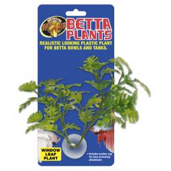 Betta plant - window leaf bp25 - ZOOMED