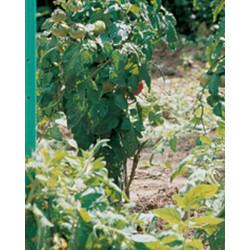Tuteur tomato avec réserve 20mmx1.50m PVC vert - NORTENE