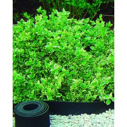 Bordure selfix h13cm-5m caoutchouc recyclé noir - NORTENE