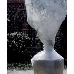 Film bubble 1x10m transparent - NORTENE