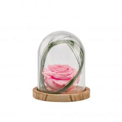 Verrine stab cloche s bois rose pastel - NATURALYS