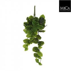 Peperomia à suspendre vert - l58xb20xh14cm - MICA