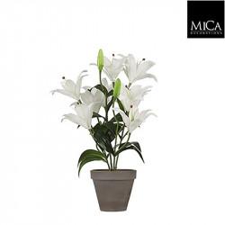 Lis tigre blanc pot Stan d13,5cm - h47xd45cm - MICA