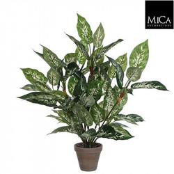 Dieffenbachia vert pot Stan d15,5cm - h70xd55cm - MICA
