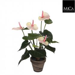 Anthurium rose cl. pot Stan d11,5cm - h40xd30cm - MICA