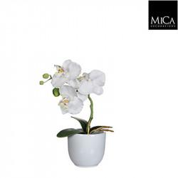 Phalaenopsis blanc pot Tusca d8,5cm - h26xd12cm - MICA