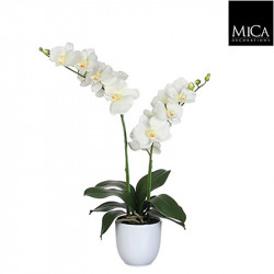 Phalaenopsis crème pot Tusca d12cm - h66xd38cm - MICA