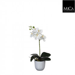 Phalaenopsis blanc pot Tusca d10cm - h48xd13cm - MICA
