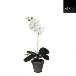 Phalaenopsis blanc pot Stan d11,5cm - h48xd13cm - MICA