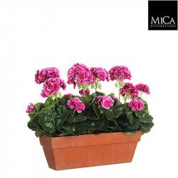 Géranium violet jardinière terra - l39xb13xh40cm - MICA