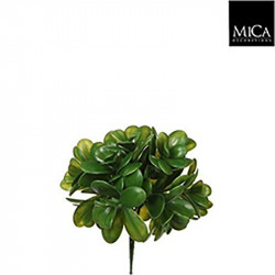 Crassula vert - l20cm - MICA