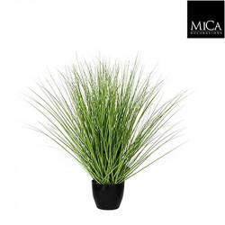 Graminée verte pot plastique d11,5cm - h50xd40cm - MICA