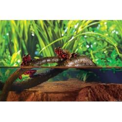 Liane de jungle - grande taille - Exo Terra