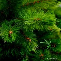 """Sapin artificiel """"Bishorn Pine"""" - 185cm"""