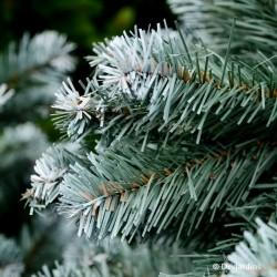 "Sapin artificiel ""Alaskan Cedar Frosted Blue"" - 215cm"